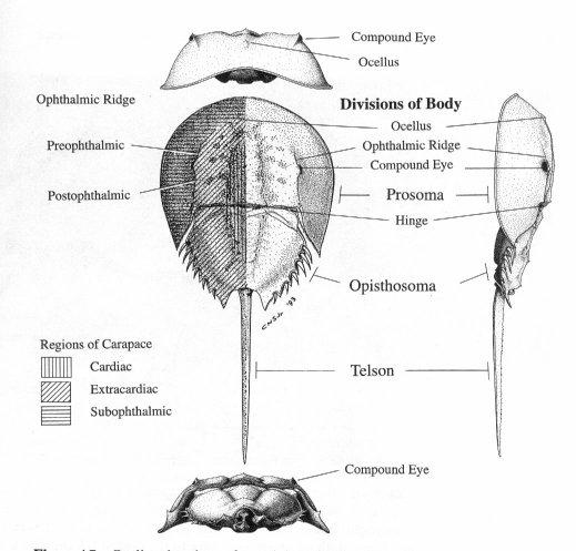 Psychology 3203 - Topics